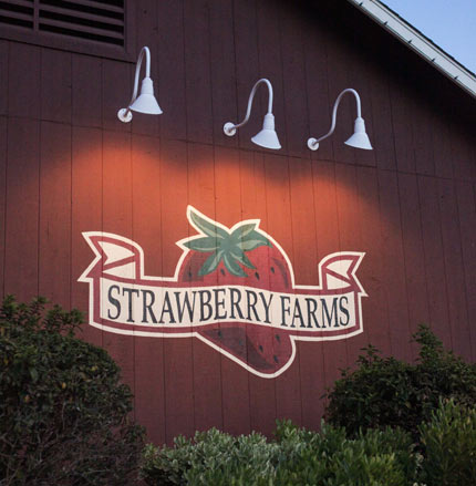 Strawberry Farms Irvine  - Alders Photography